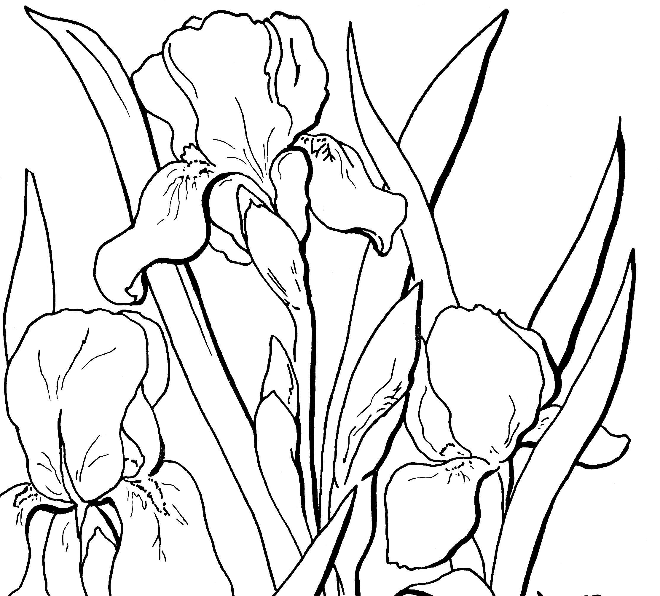 free flower coloring pages for adults flower coloring pages for adults best coloring pages for pages coloring adults flower for free