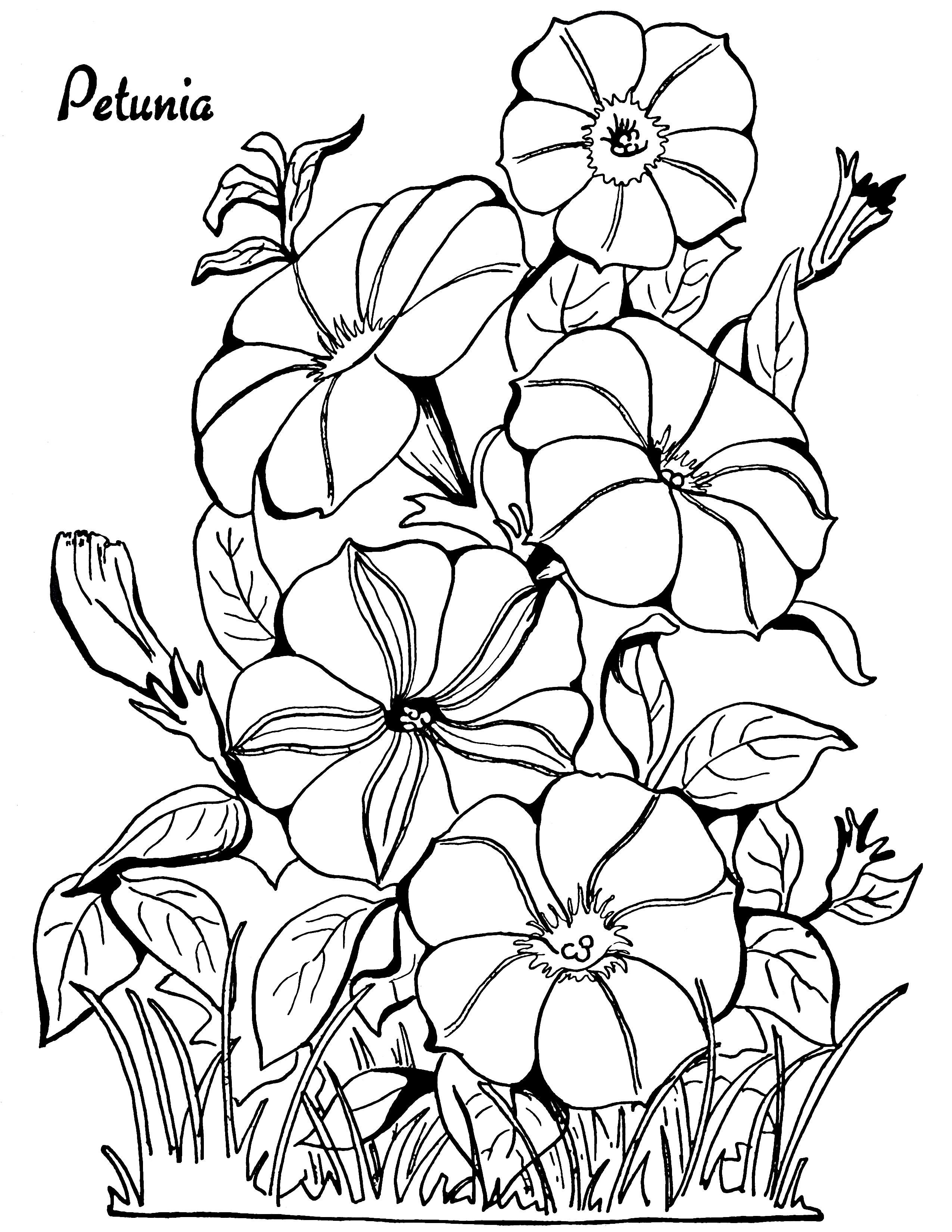 free flower coloring pages for adults free printable floral coloring page ausdruckbare adults for free coloring flower pages