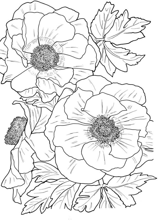 free flower coloring pages for adults get this realistic flowers coloring pages for adults 7dg40 free coloring adults flower for pages