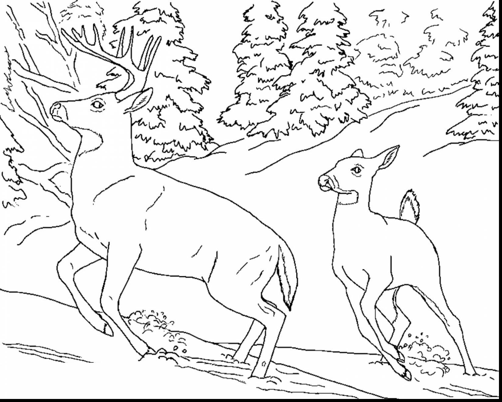free hunting coloring pages 28 best hunting and fishing coloring pages for kids free hunting coloring pages