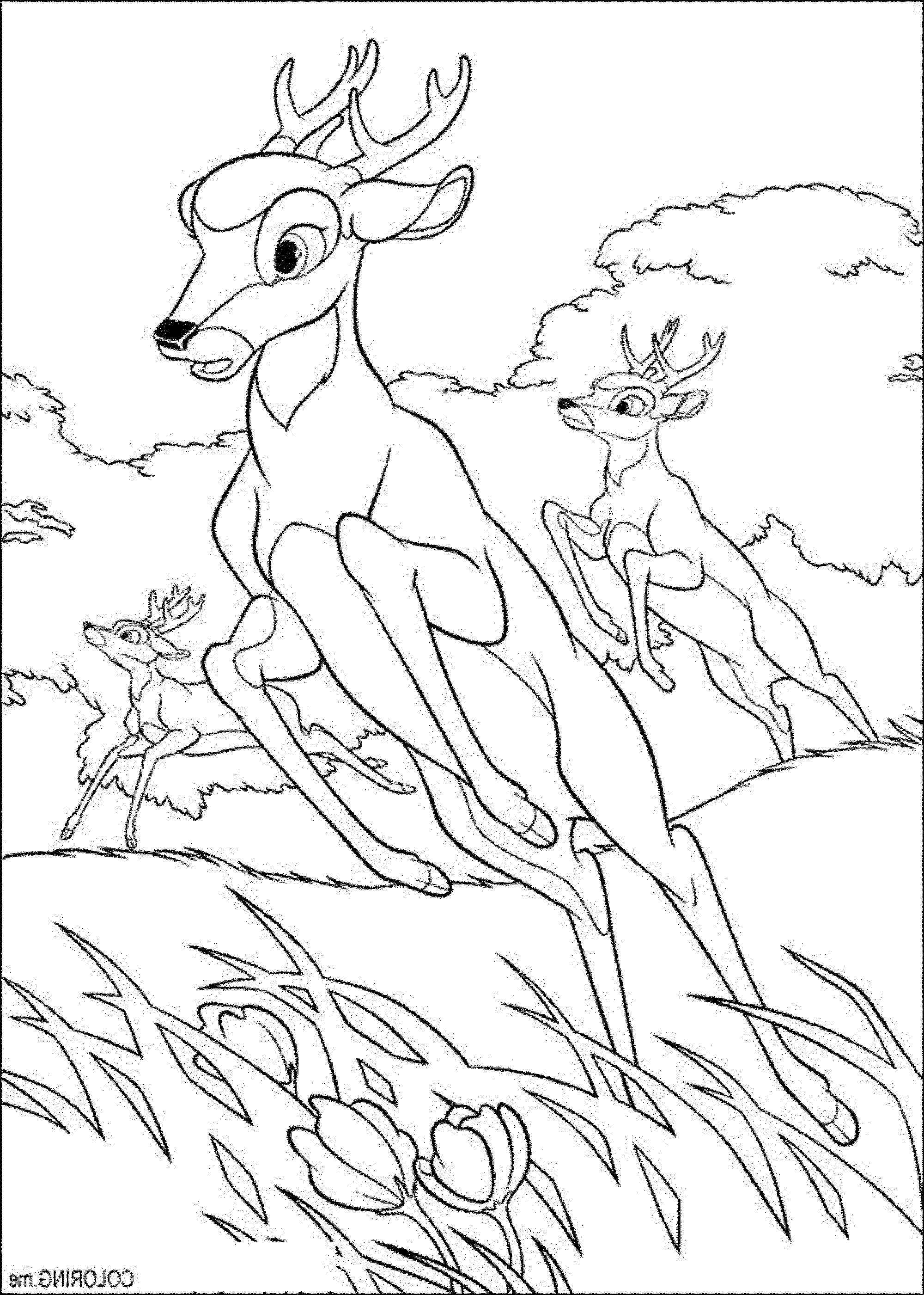 free hunting coloring pages adult coloring pages deer at getcoloringscom free coloring free pages hunting