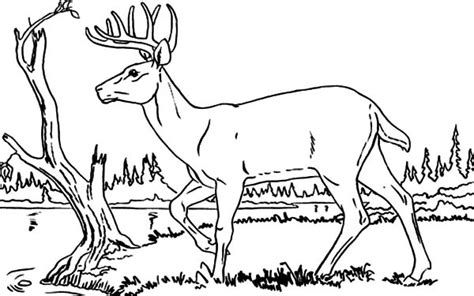 free hunting coloring pages hunting coloring page coloring home hunting free coloring pages