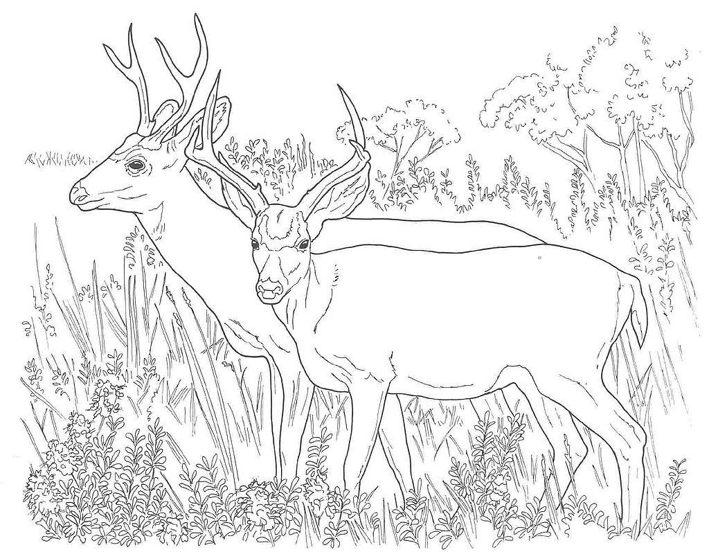 free hunting coloring pages turkey hunting coloring pages at getcoloringscom free hunting pages coloring free