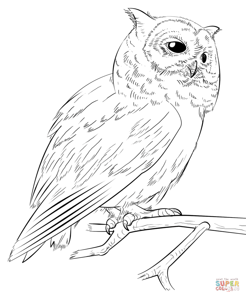 free owl coloring pages simple owl drawing at getdrawings free download coloring free owl pages