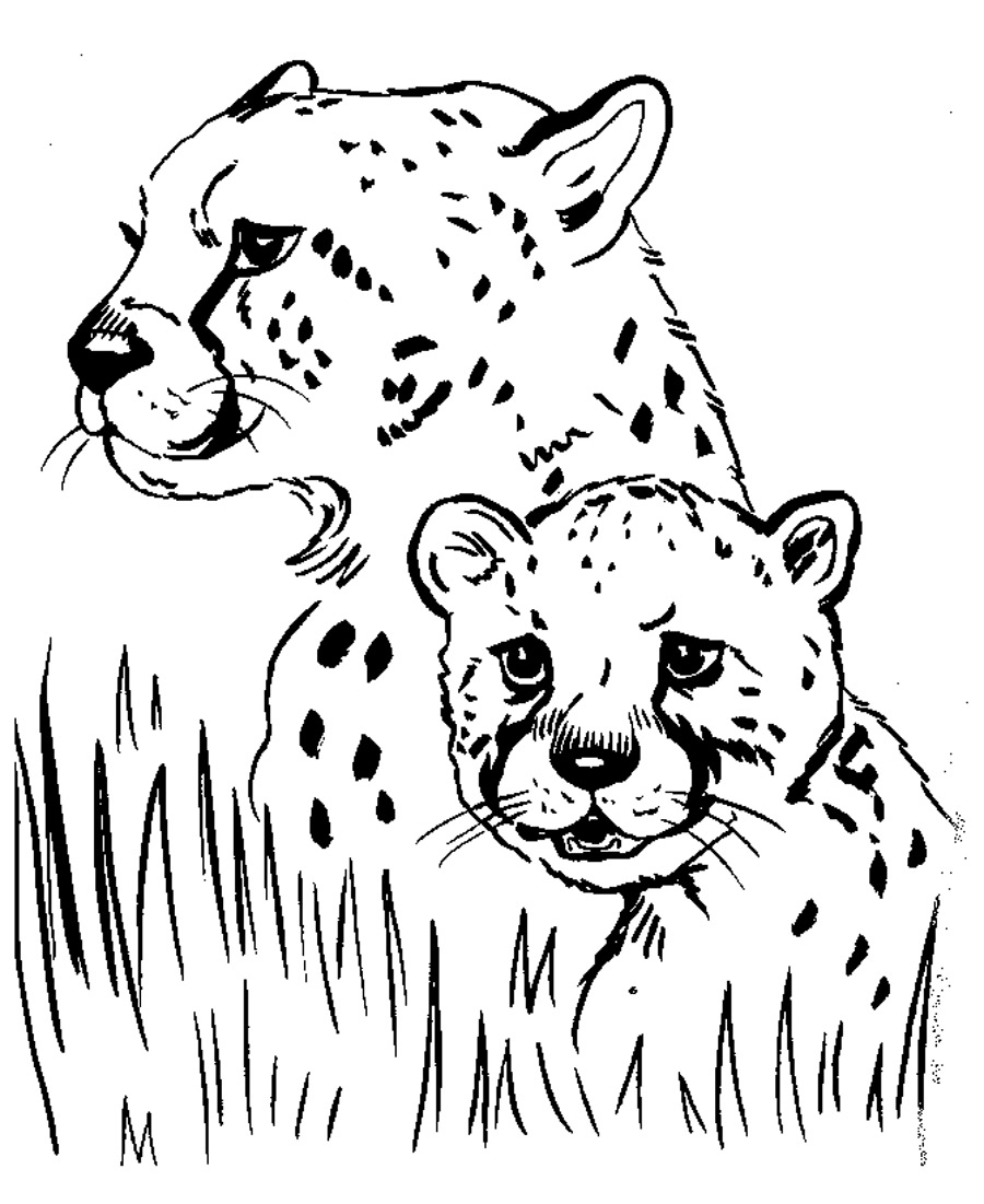free printable animal colouring pages 25 cute baby animal coloring pages ideas we need fun animal printable pages colouring free