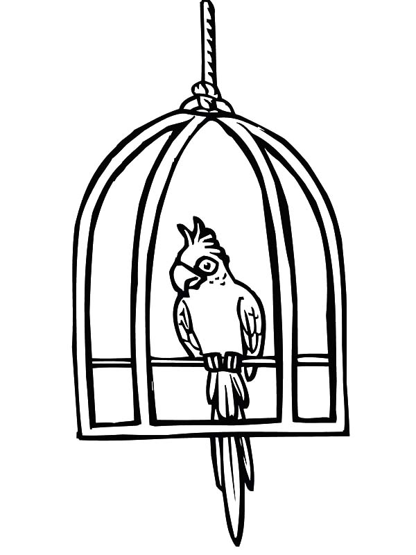 free printable birdhouse coloring pages bird cage coloring page at getcoloringscom free coloring pages printable birdhouse free