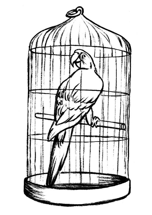 free printable birdhouse coloring pages free printable birdhouse coloring pages free printable birdhouse coloring pages