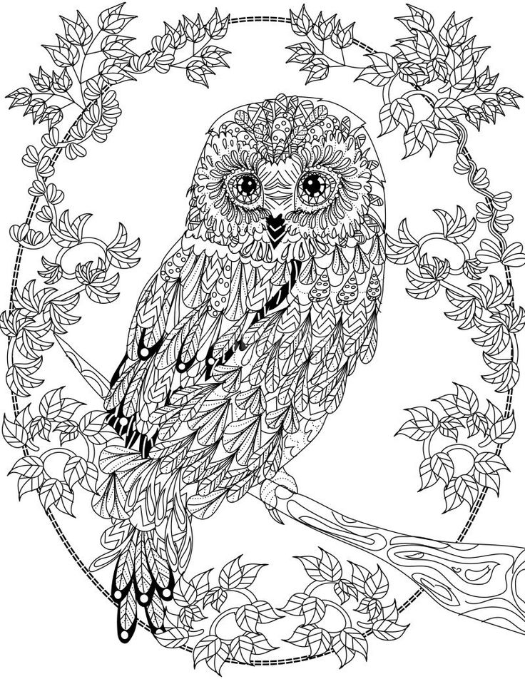 free printable coloring page free book owl owls adult coloring pages coloring printable free page