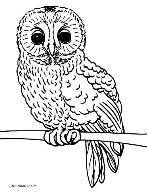 free printable coloring pages of owls 10 difficult owl coloring page for adults coloring pages of free printable owls