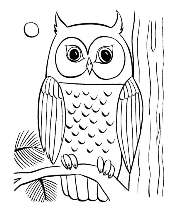 free printable coloring pages of owls owl coloring pages for adults free detailed owl coloring owls coloring printable of free pages