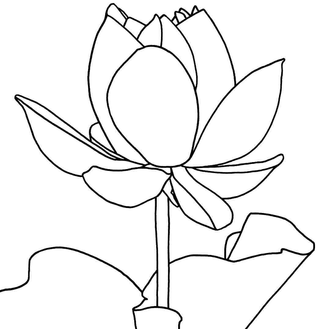 free printable flower coloring pages free printable lotus coloring pages for kids printable coloring pages flower free