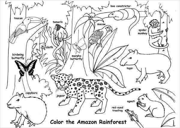 free printable jungle coloring pages jungle coloring pages 2 coloring kids free pages jungle printable coloring