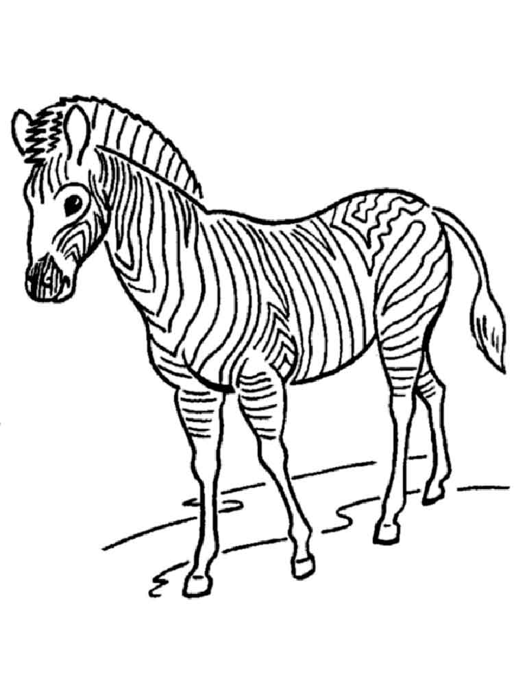 free zebra coloring pages zebra coloring pages download and print zebra coloring pages zebra free coloring pages