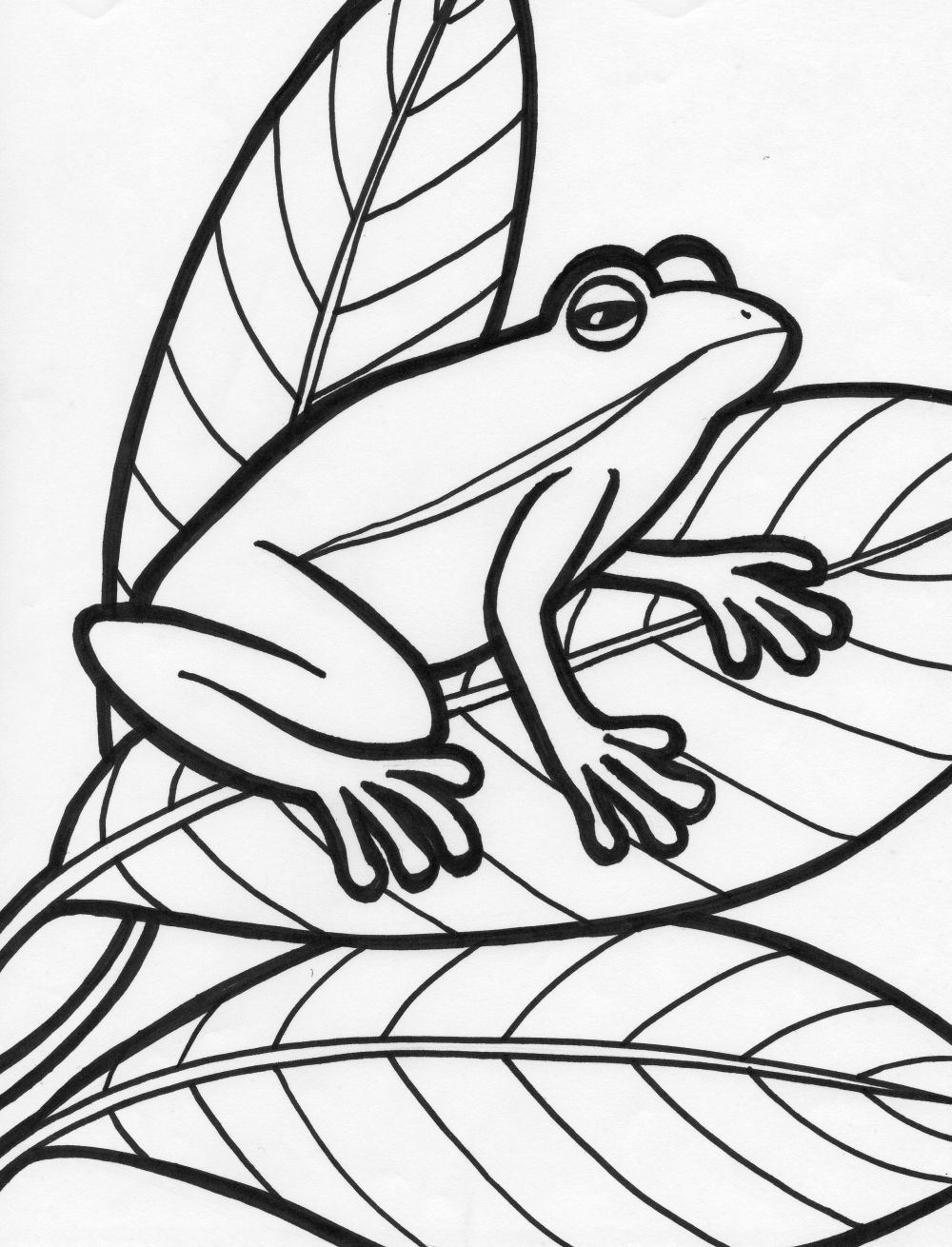 frog coloring pages to print free printable frog coloring pages for kids cool2bkids print frog coloring pages to