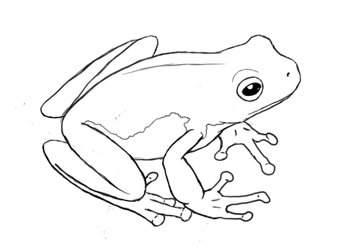frog drawings drawing of the frog outline illustrations royalty free frog drawings