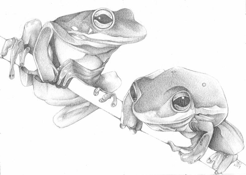 frog drawings how to draw a frog step by step drawings frog