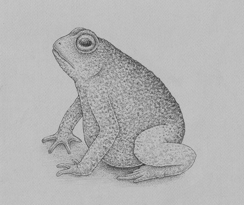frog drawings tree frog drawing by vincent young frog drawings