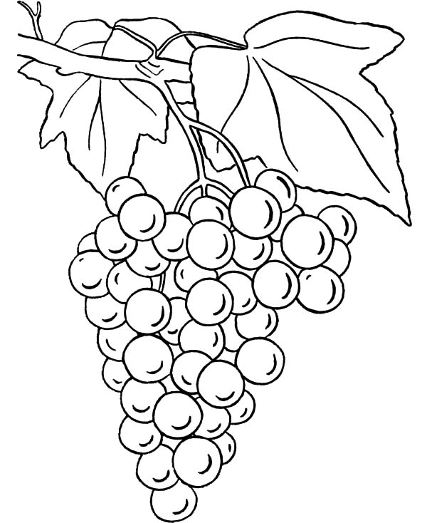 g for grapes coloring page g for grapes coloring page coloring g page grapes for