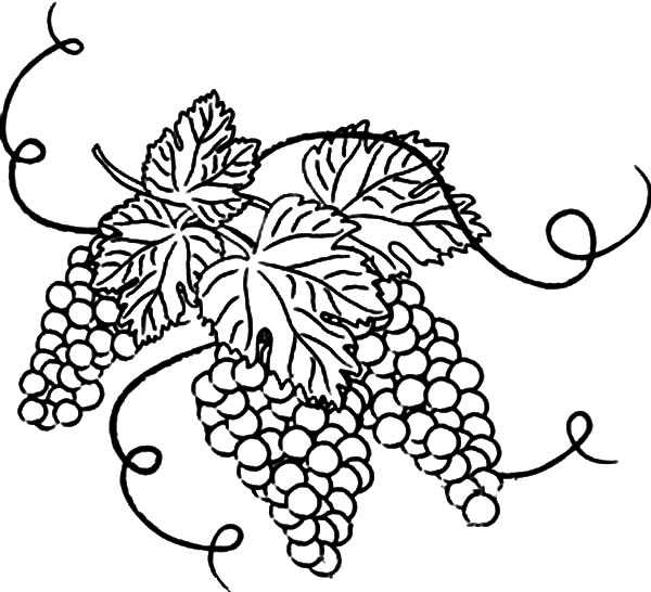 g for grapes coloring page letter g writing and coloring sheet g coloring grapes page for