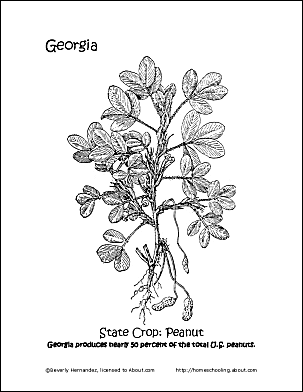 georgia state seal coloring page georgia wordsearch crossword puzzle and more coloring state page georgia seal