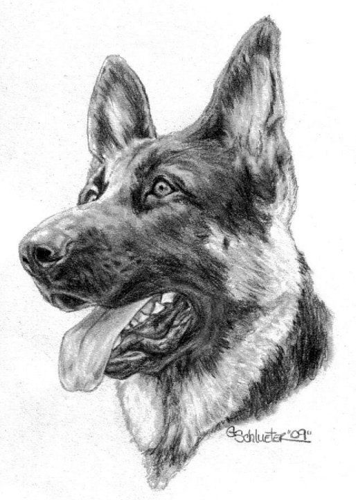 german shepherd pictures to print german shepherd coloring pages to download and print for free pictures shepherd print to german