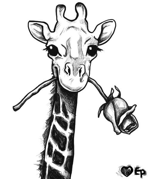 giraffe face drawing 39the high life39 giraffe fine art pencil drawings flickr drawing giraffe face