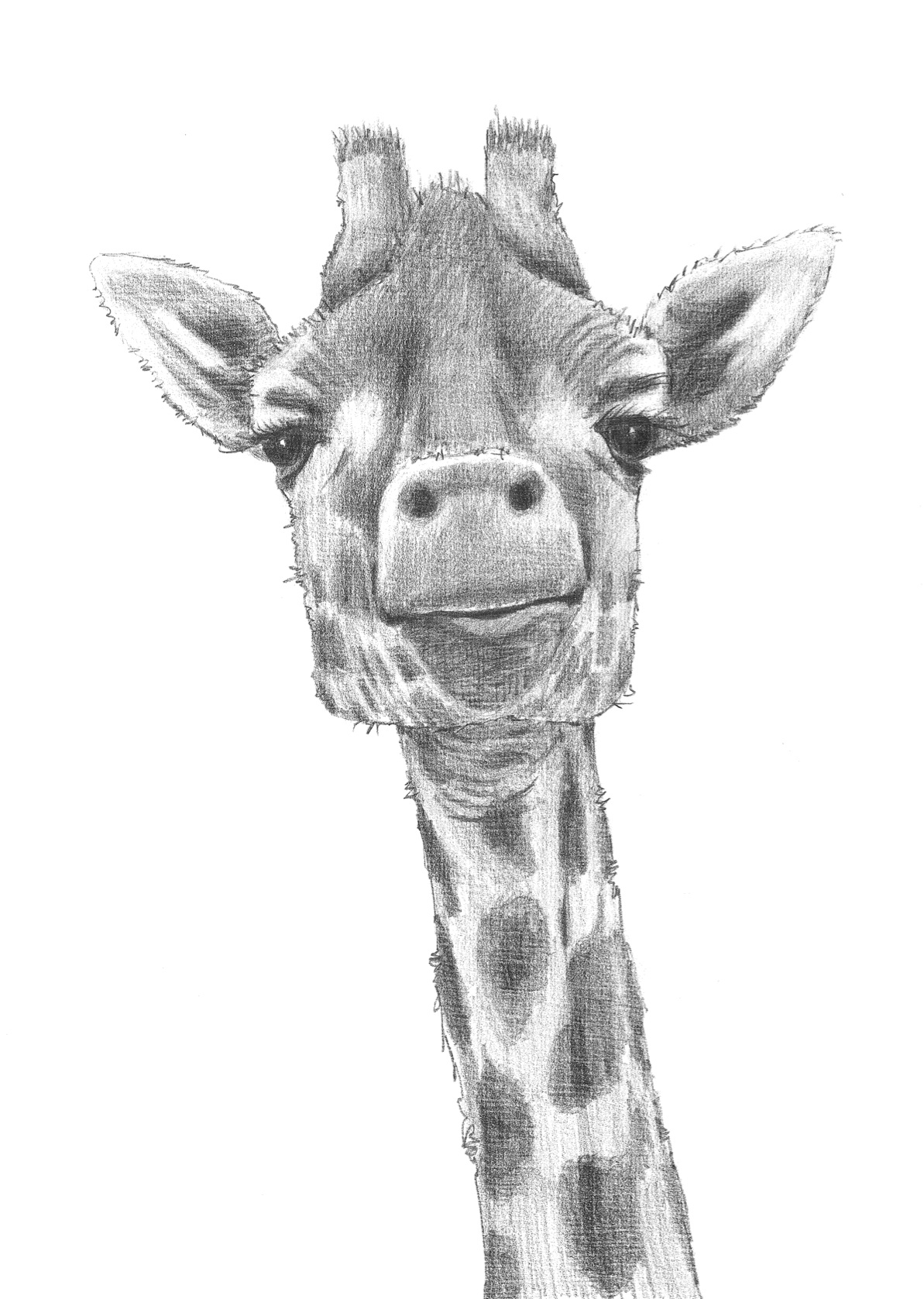 giraffe face drawing giraffe art face giraffe drawing