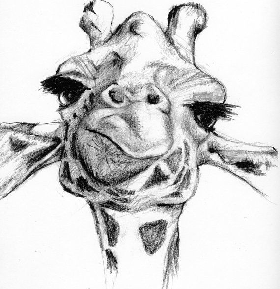 giraffe face drawing giraffe drawing by greg joens giraffe drawing face