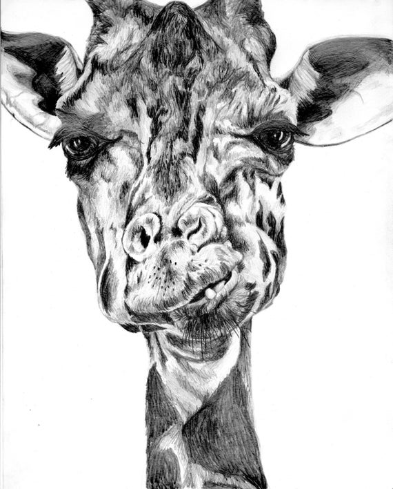 giraffe face drawing image result for pencil drawings giraffe art baby drawing giraffe face