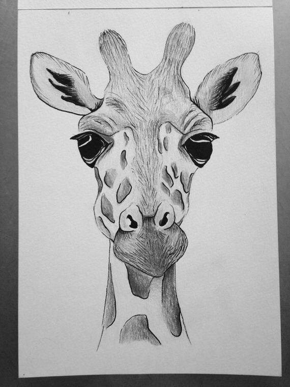 giraffe face drawing original drawing of giraffe face using by annscraftboutique drawing giraffe face