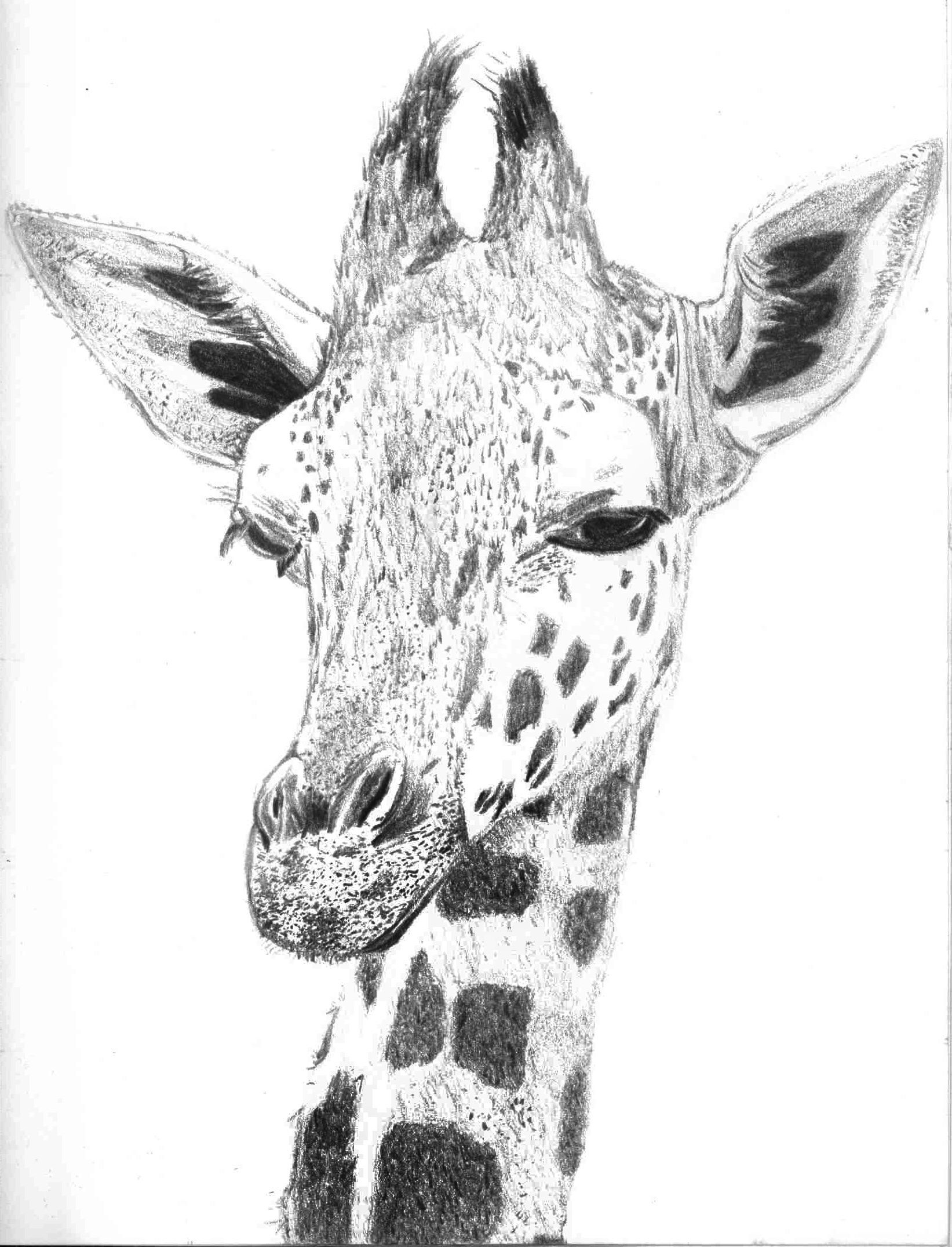 giraffe face drawing pin by jammy hammy on watercolour paintings in 2019 drawing face giraffe