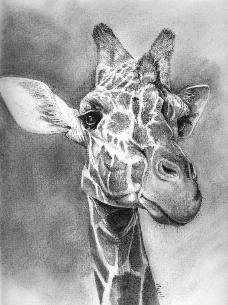giraffe face drawing pin by rachel joy on my sketches drawings art sketches drawing face giraffe