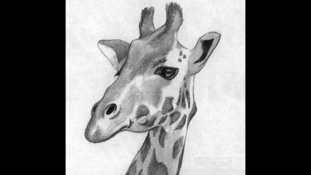 giraffe face drawing smile in 2020 giraffe artwork giraffe drawing giraffe art giraffe face drawing