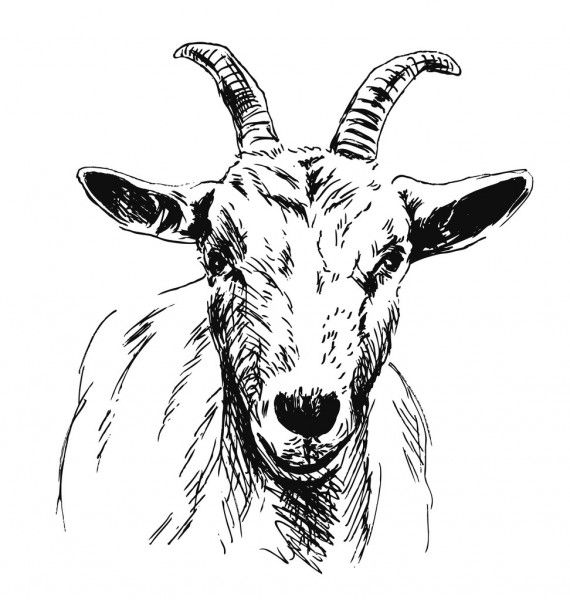 goat head drawing goat drawing images at getdrawings free download head goat drawing