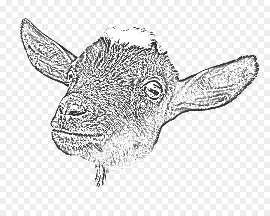 goat head drawing goat head stock vector illustration of sign year design goat drawing head