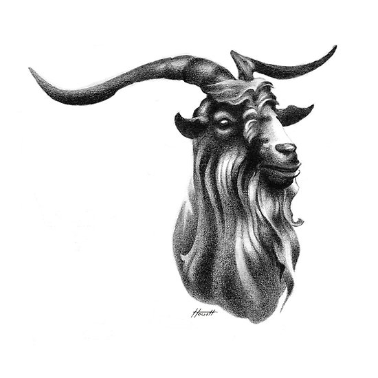 goat head drawing goat of mendes by malignantimpression on deviantart goat head drawing