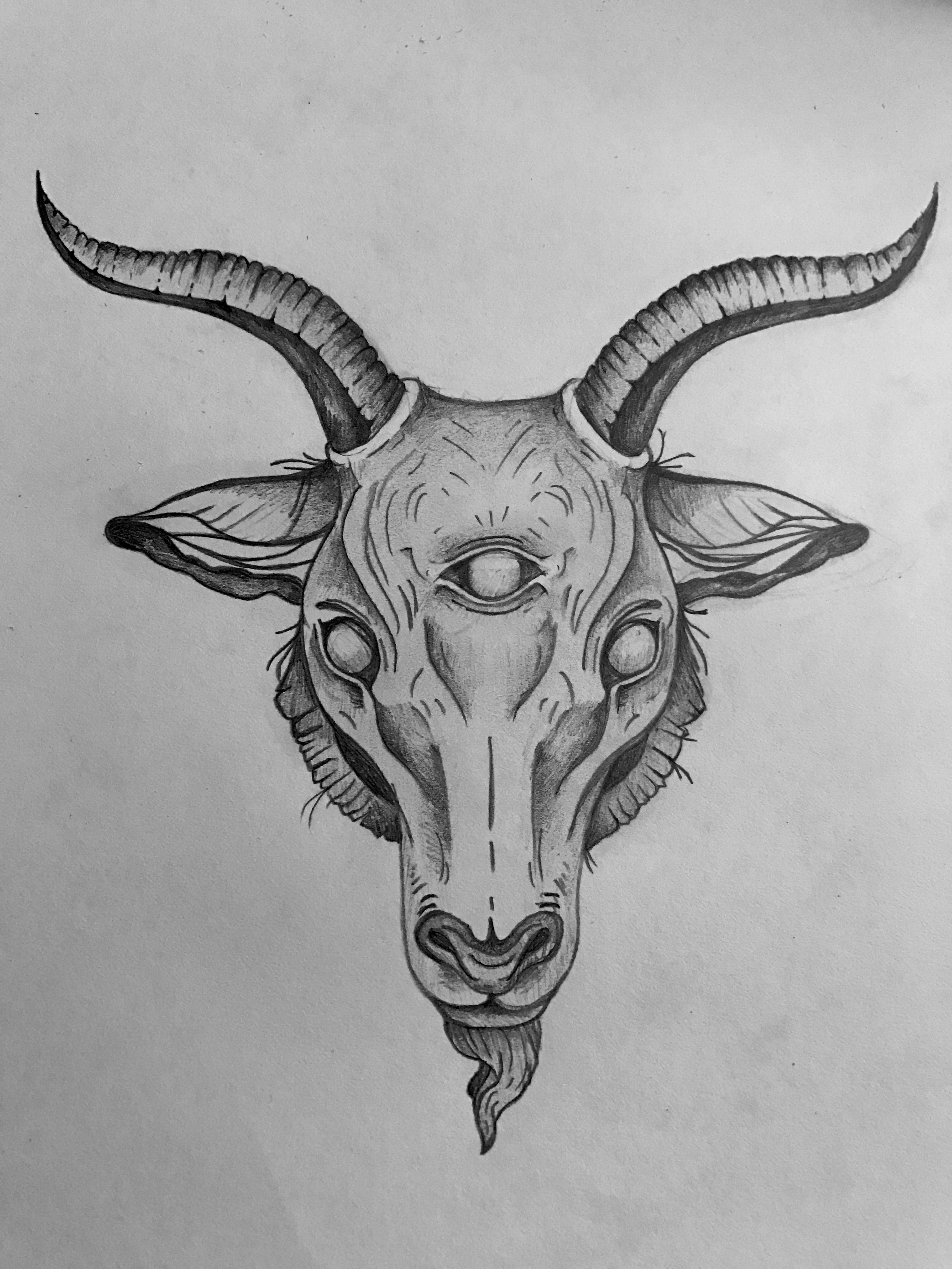 goat head drawing goat skull drawing at getdrawings free download drawing goat head