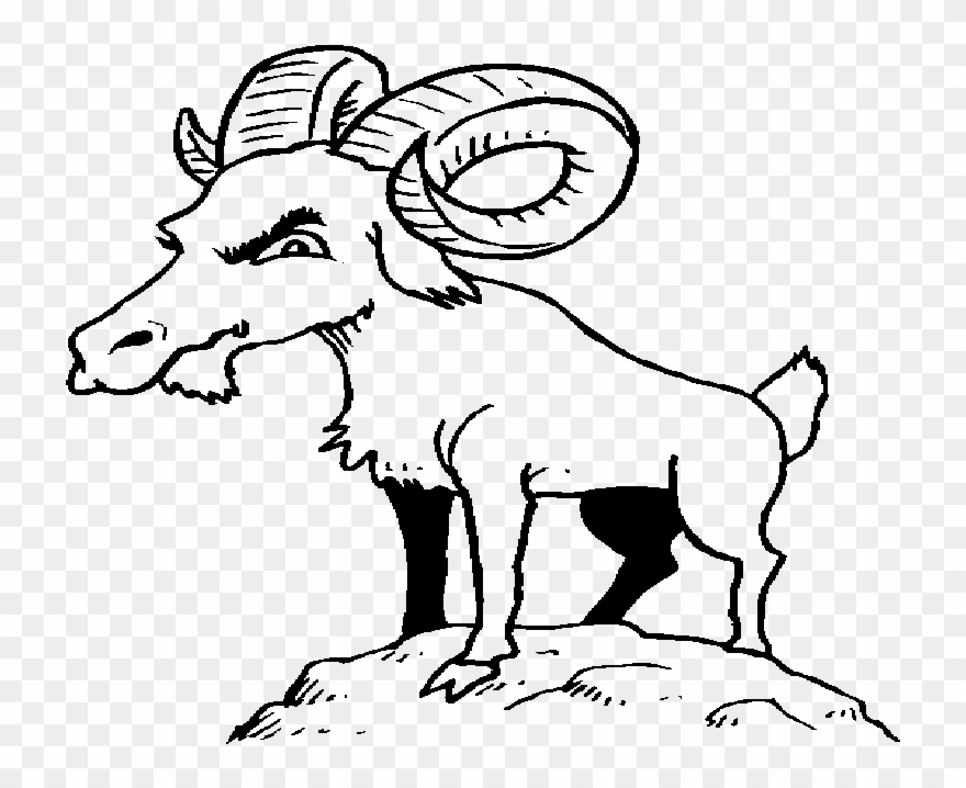 goat picture cartoon funny goat cartoon funny animal cartoon picture goat