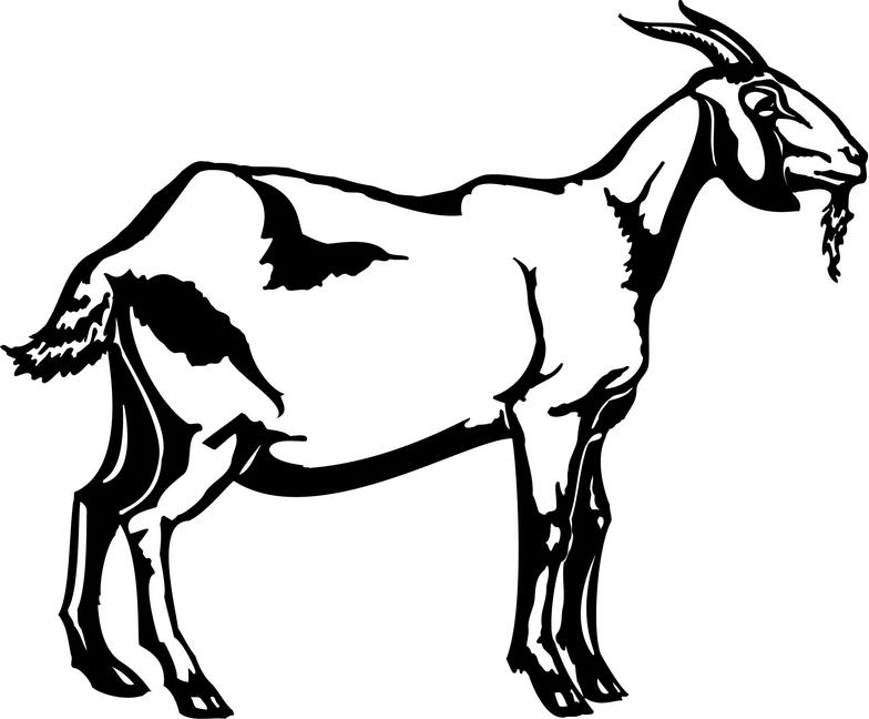 goat picture cartoon goat picture cartoon cartoon picture goat