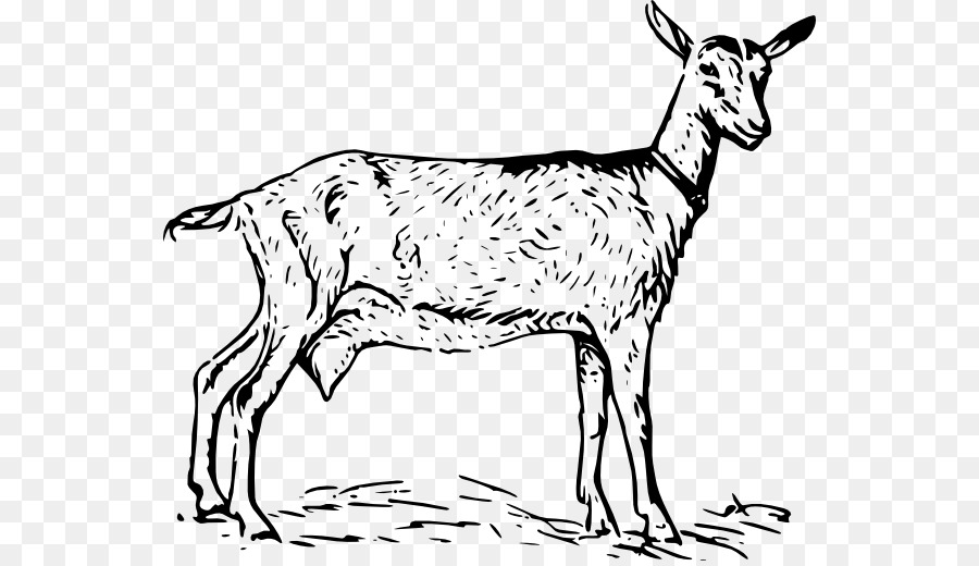 goat picture cartoon how to draw cartoon billy goats with simple drawing cartoon picture goat