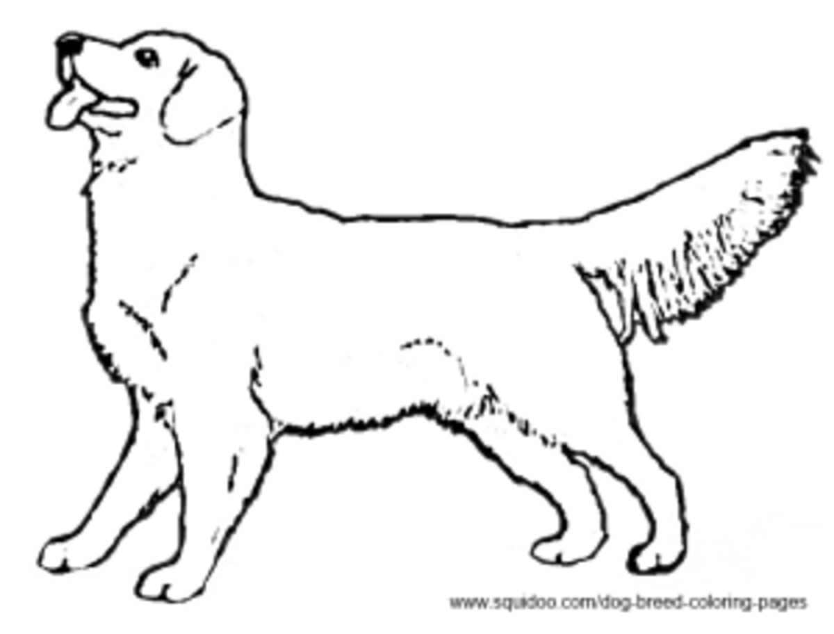 golden retriever coloring page coloring pages golden retriever golden retriever page coloring