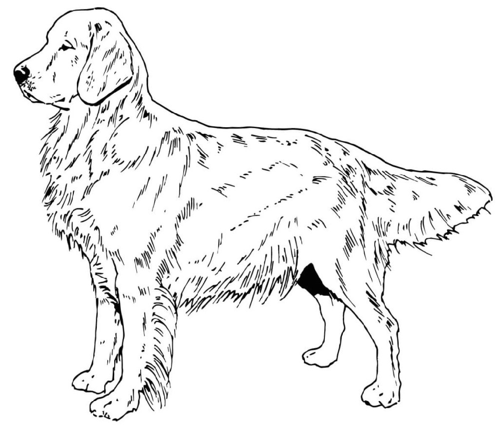 golden retriever coloring page golden retriever coloring pages to download and print for free retriever golden page coloring