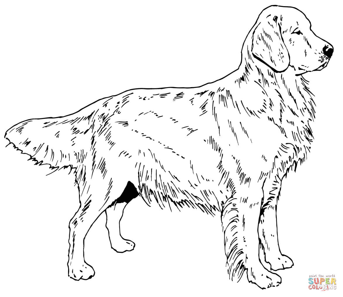 golden retriever coloring page golden retriever puppy coloring pages printable coloring golden page retriever coloring