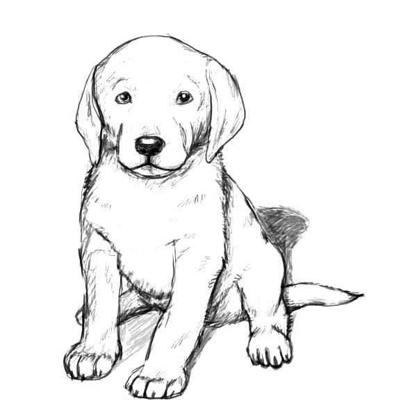 golden retriever coloring page golden retriever puppy drawing at getdrawings free download retriever coloring golden page