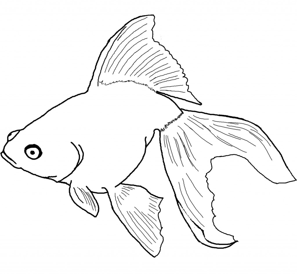 goldfish coloring goldfish coloring pages download and print goldfish goldfish coloring 1 1