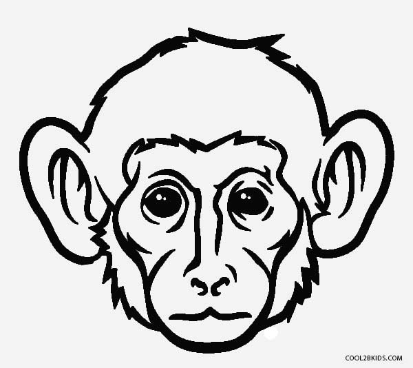 gorilla face coloring pages gorilla face drawing at getdrawings free download pages gorilla face coloring