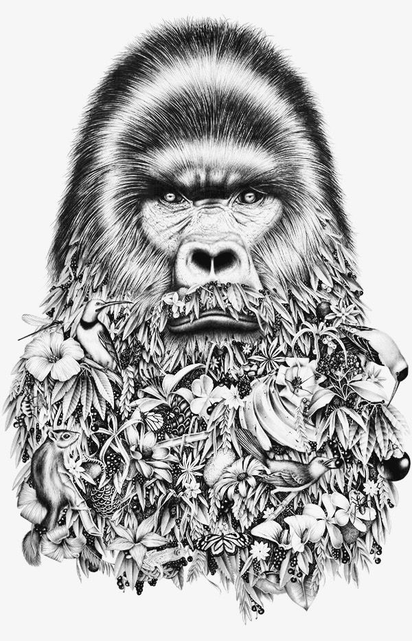 gorilla face coloring pages pin op adult coloring pages gorilla face coloring pages