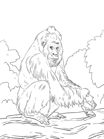 gorilla face coloring pages western lowland gorilla coloring page supercoloringcom coloring gorilla face pages