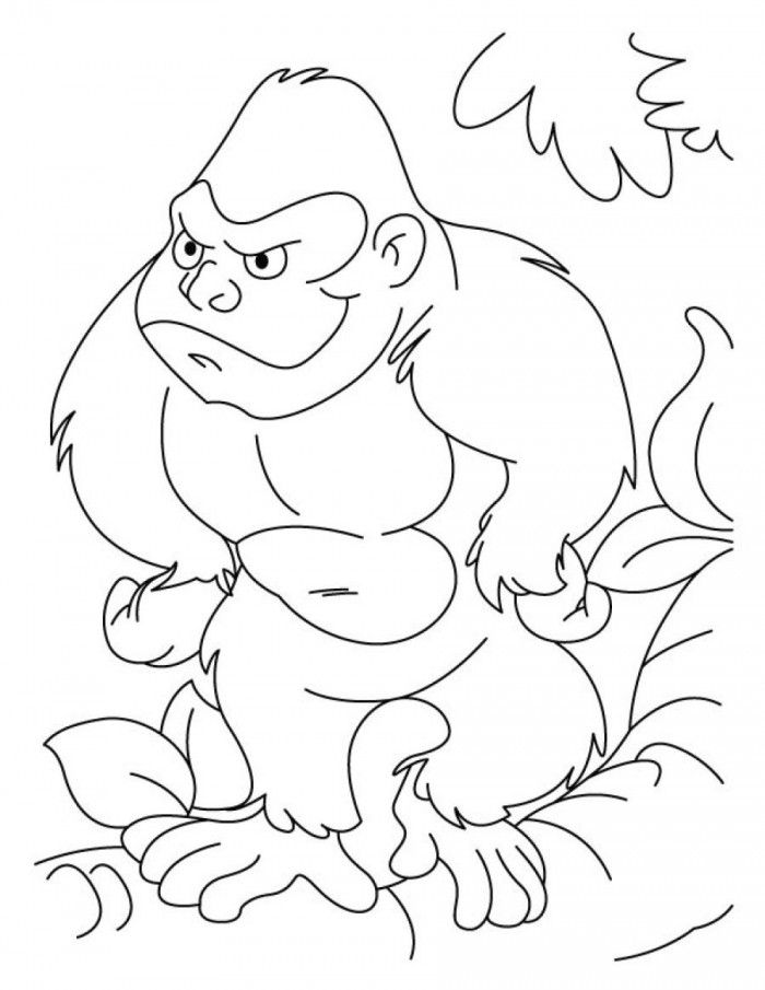 gorilla pictures to print gorilla pictures for kids coloring home pictures to gorilla print