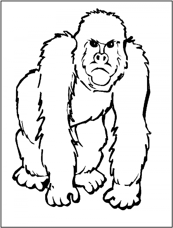 gorilla pictures to print gorilla pictures for kids coloring home to gorilla pictures print